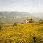 VALPOLICELLA VINEYARDS WINE ITALY